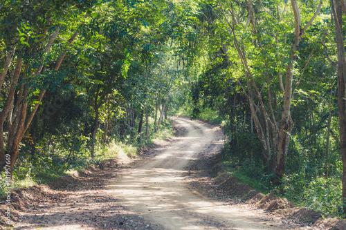 Fotobehang Lente countryside road in forest