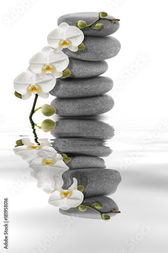Orchidée blanche sur galet et son reflet