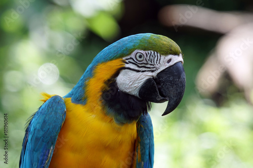 Plexiglas Papegaai Parrot with good morning air