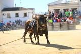 toro bravo bull  - 181968017