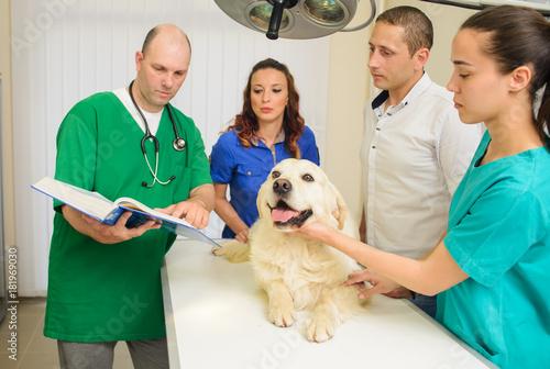 Fototapeta Healthy dog under medical exam