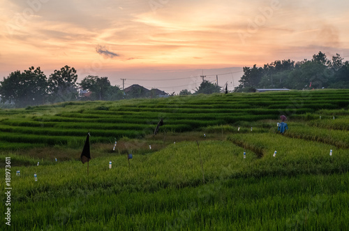 Deurstickers Rijstvelden Rice field in Pererenan at sunset time, Bali.