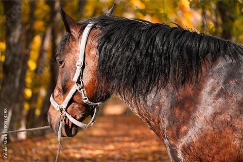 Plexiglas Paarden Horse.