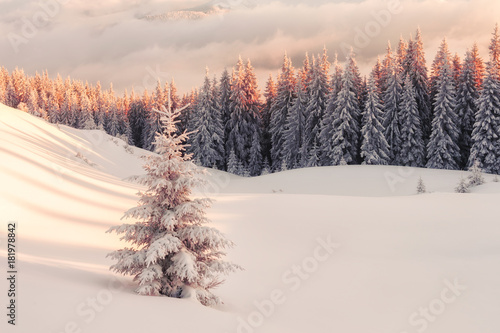Plexiglas Winter Dramatic wintry scene with snowy trees.