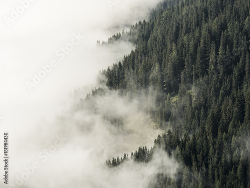 Fog covered forest mountain side, half clouds, half trees, alps, Southtirol, Italy - 181984430