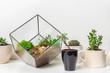 mini succulent garden in glass florarium