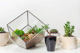 mini succulent garden in glass florarium - 181986482