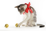 cat wearing red ribbon playing with christmas balls on white background - 181988627