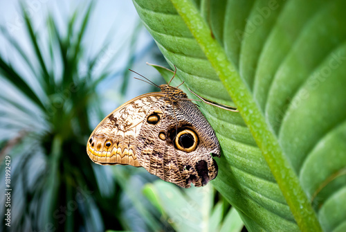 Fotobehang Vlinder Farfalla