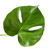 green tropical leaf