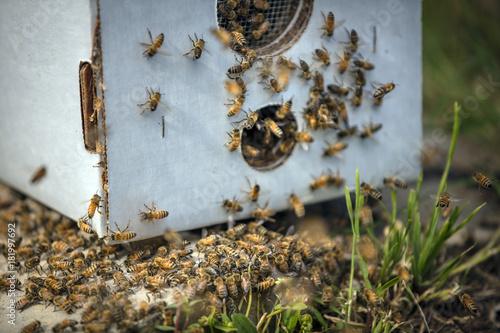 Fotobehang Bee bees swarming