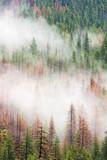 Yosemite 4 - 182012088