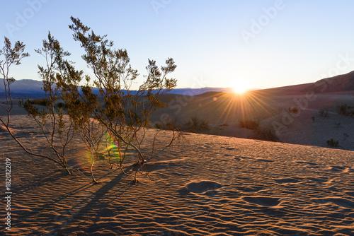 Fotobehang Diepbruine Mesquite Sand Dunes
