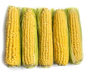 Yellow corn in the cob on a white background