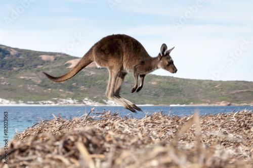 Aluminium Kangoeroe kangaroo australia
