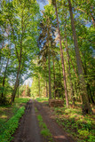 Sunny summer in the green forest in Poland, Europe