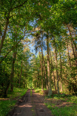 Beautiful summer in green the forest in Poland, Europe
