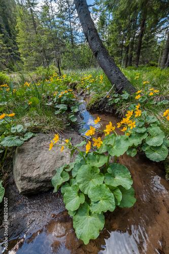 Fotobehang Diepbruine Spring landscape with flowers