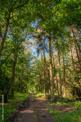 Fotobehang Landschappen Beautiful summer in green the forest in Poland, Europe