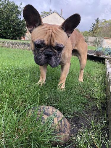 Deurstickers Franse bulldog Bouledogue français