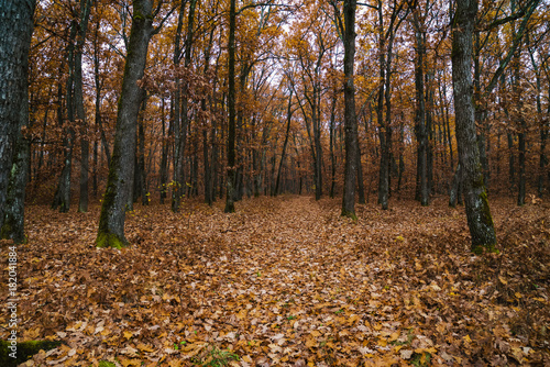 In de dag Natuur landscape with oak forest in autumn