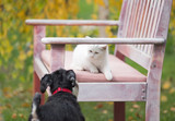 Cat and dog playing on bench in garden - 182048066