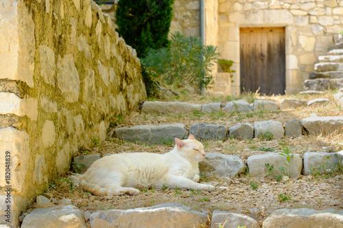 Foto op Canvas Nice Le chat de couleur blanche-beige dormant sur l'escalier en pierre dans un petit village provençal. France.