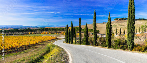 Staande foto Toscane Traditional countryside and landscapes of beautiful Tuscany. vineyards and cypresses. Italy
