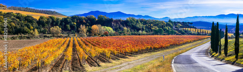 Fotobehang Freesurf Traditional countryside and landscapes of beautiful Tuscany. vineyards and cypresses. Italy
