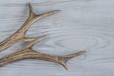 deer antlers - 182061042
