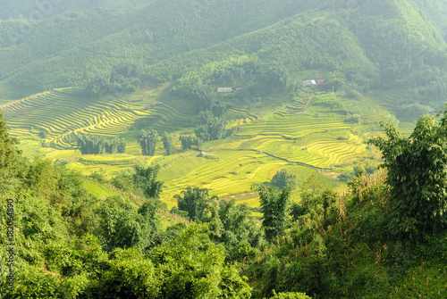In de dag Pistache sight of the fields of rice cultivated in terraces in the Sapa valey in Vietnam.