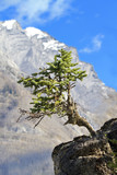 Solitary tree grows from jutting rock - 182065628