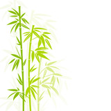 Bamboo Green Colors Shadow