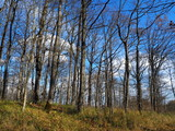 The blue sky eeps through the bare trees.