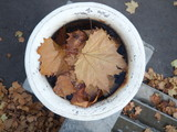 Plaster bowl filled with fallen maple leaves in the park