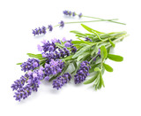Lavender bunch on a white - 182086481