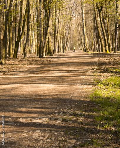 Foto op Canvas Weg in bos Las