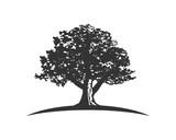oak capital finance - 182092095