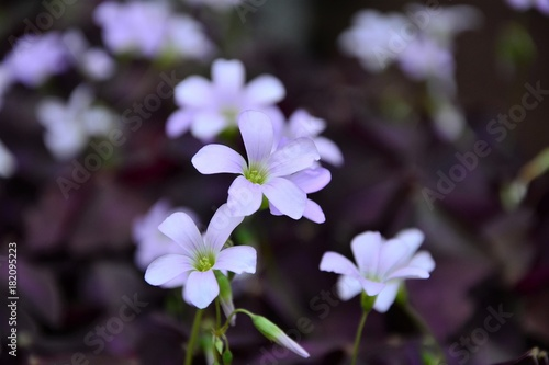 kwiaty w ogrodzie 3