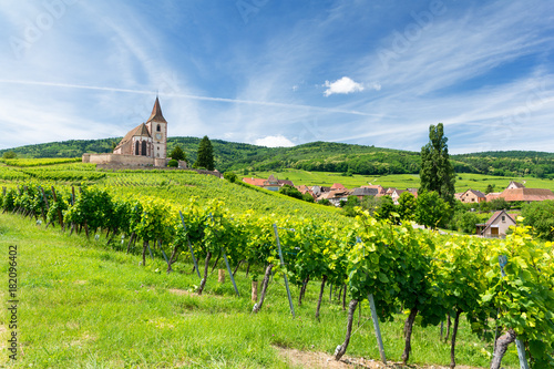 Foto op Aluminium Wijngaard old church and vineyards in Hunawihr village in Alsace, France