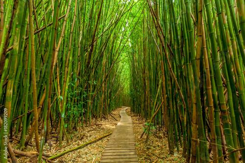 Plexiglas Bamboe Bamboo Trail