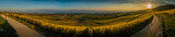 Panorama of vineyards and Geneva lake