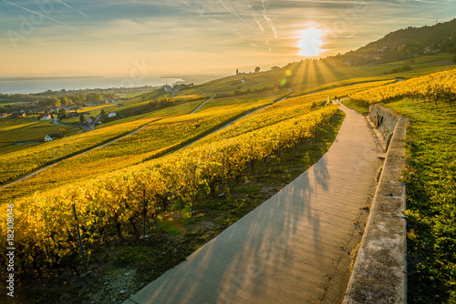 Foto op Canvas Honing Panorama of vineyards and Geneva lake