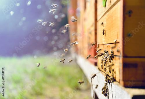 In de dag Bee Bees flying around beehive. Beekeeping concept.