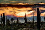 Sonoran Sunset - 182120216
