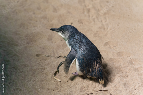 Plexiglas Pinguin Strandspaziergang