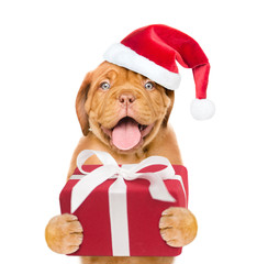Funny puppy in red christmas hat with gift box. isolated on white background
