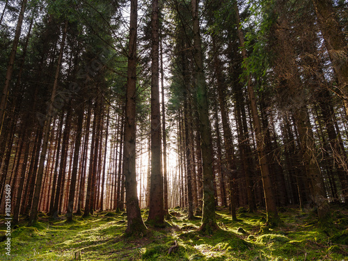 Plexiglas Chocoladebruin Solar radiation in the forest