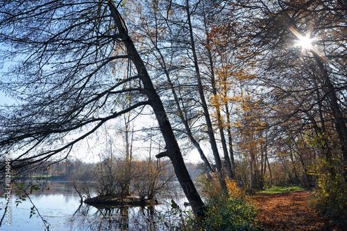 Deurstickers Cappuccino étang de Grez sur Loing dans le parc régional naturel du Gâtinais français