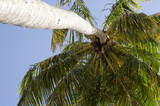 Coconut tree on tropical beach  - 182148620